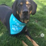 Tie Dye Bandana Craft for National Dog Day