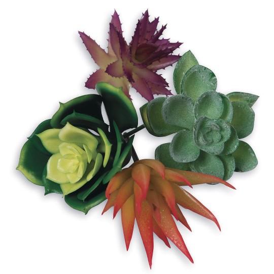 diy succulent crafts