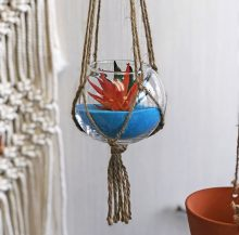 hanging plants succulents
