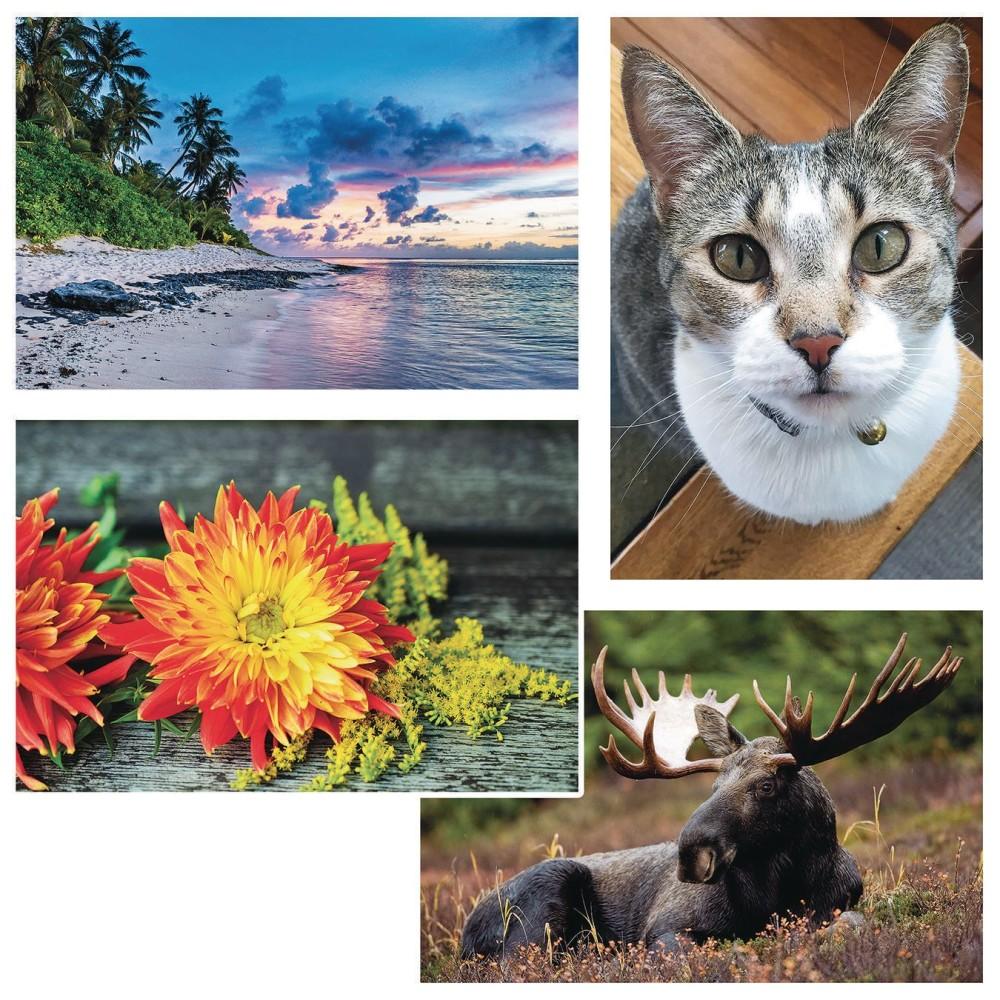 ''Thera-Jigsaw Foam Puzzles Set: BEACH Sunset, Cat, Moose, and Yellow Flowers (Set of 4)''
